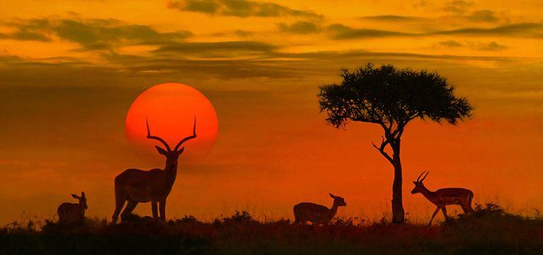 La tenue vestimentaire parfaite pour découvrir le Parc National Kruger
