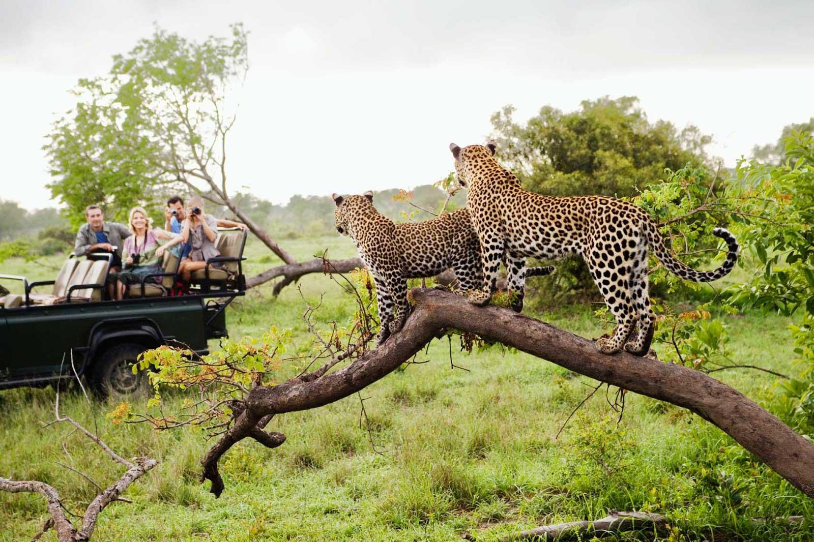 kruger-parc-afrique-du-sud-decouverte