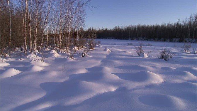 278559735-taiga-couche-de-neige-wildes-russland--sibirien-gele