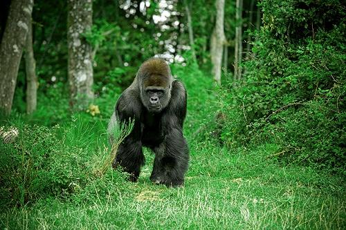 Vêtements pour safari ou voyage classique en Ouganda : nos conseils