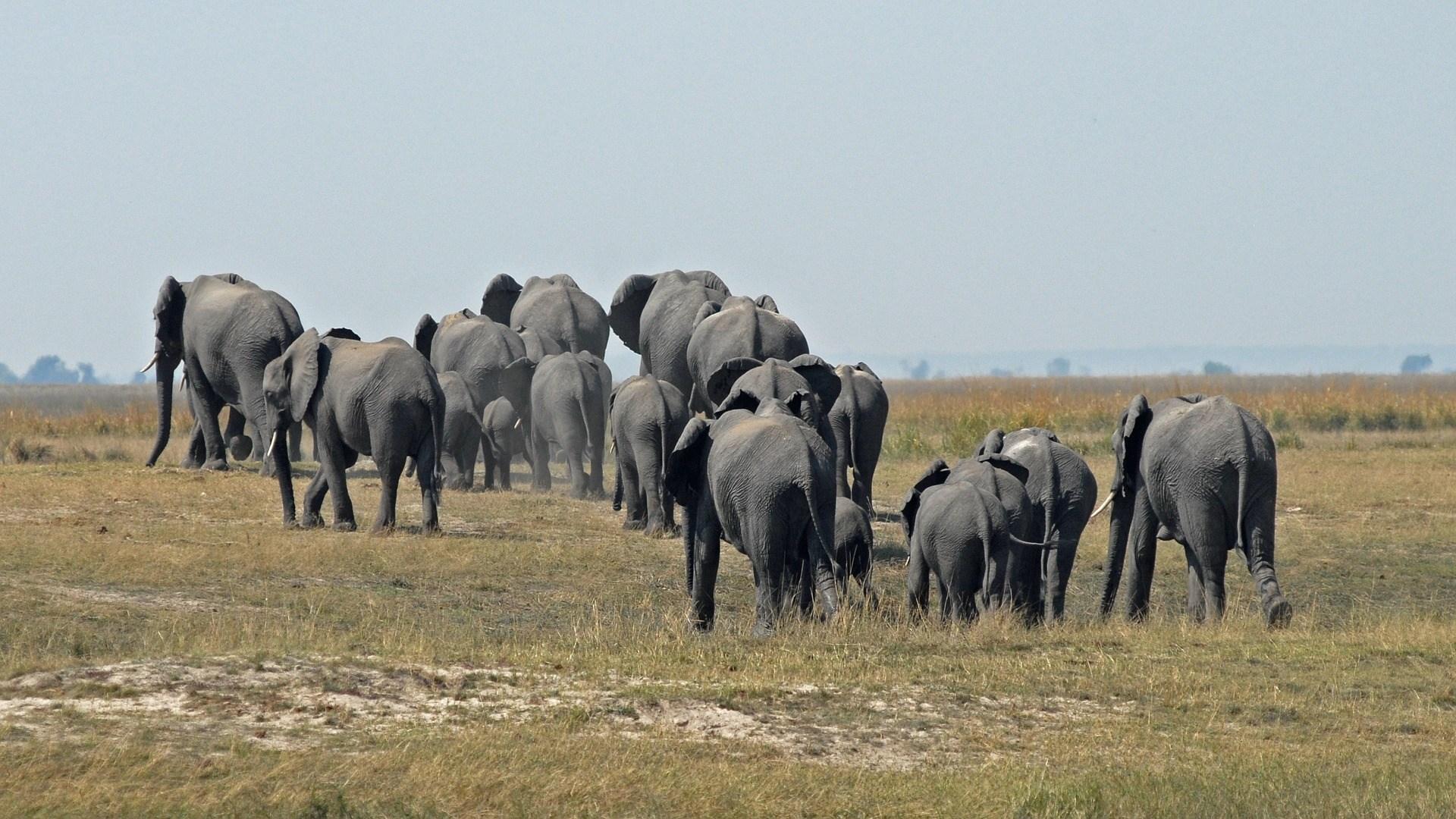 Voyage au Botswana : les meilleurs vêtements de voyage à sélectionner