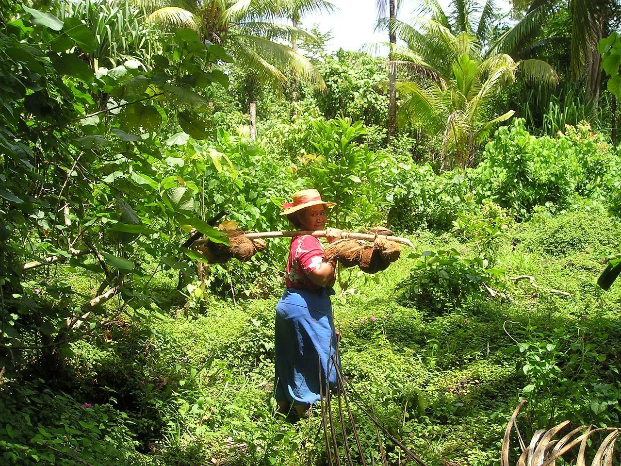 coconuts-46_1280