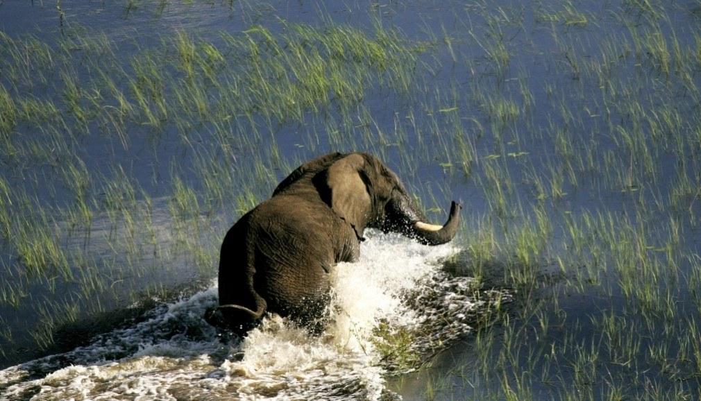 elephant-in-delta_malawi