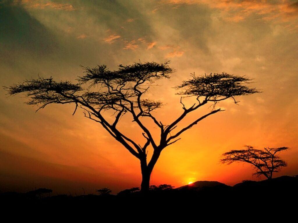 ob_342f65_photo-photo-paysage-afrique-6